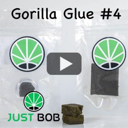 gorilla-glue-cbd-video