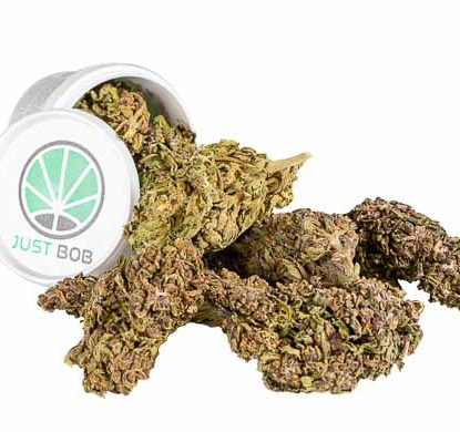 Krug Cannabis cbd Blüten Justbob Purple GG#