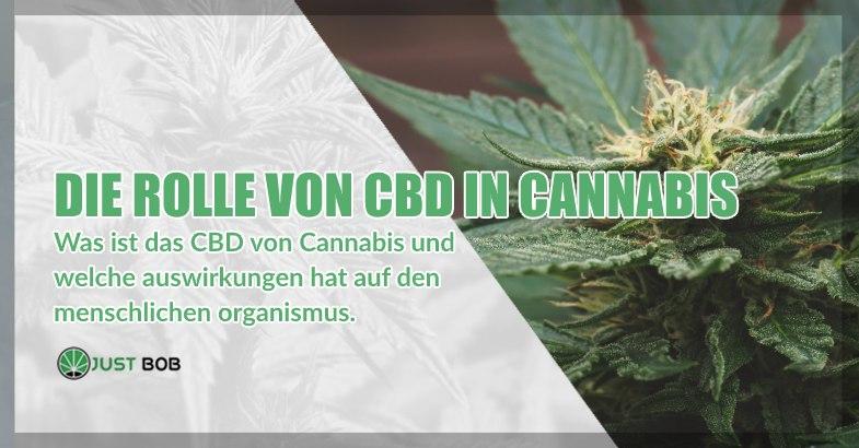 die Rolle von CBD in Cannabis