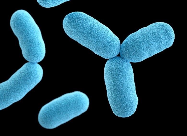 cbd als Hilfsmittel für Antibiotika gegen Bakterien