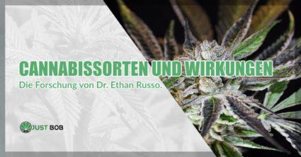 Cannabissorten und Wirkungen