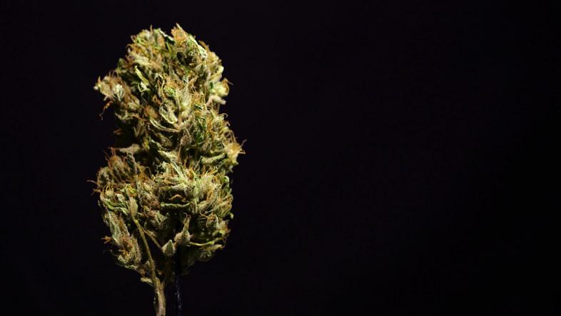 Marihuana-Liquid und die elektronische Zigarette: Dies sind die legalen Varianten
