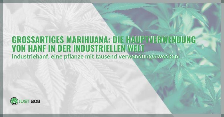 Großartiges Marihuana: Die Hauptverwendung von Hanf in der industriellen Welt
