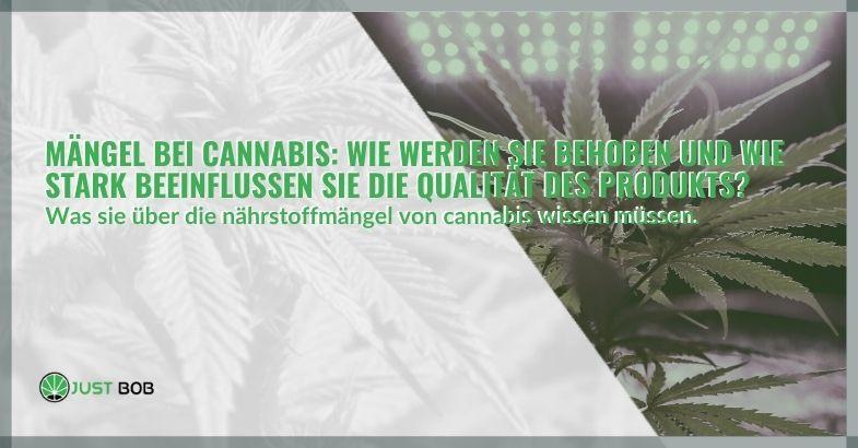 Mängel bei Cannabis: Wie werden sie behoben und wie stark beeinflussen sie die Qualität des Produkts?