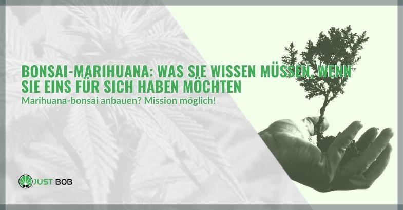 Bonsai-Marihuana: Was Sie wissen müssen, wenn Sie eins für sich haben möchten