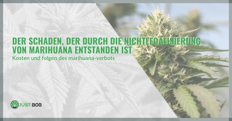 Der Schaden, der durch die Nichtlegalisierung von Marihuana entstanden ist