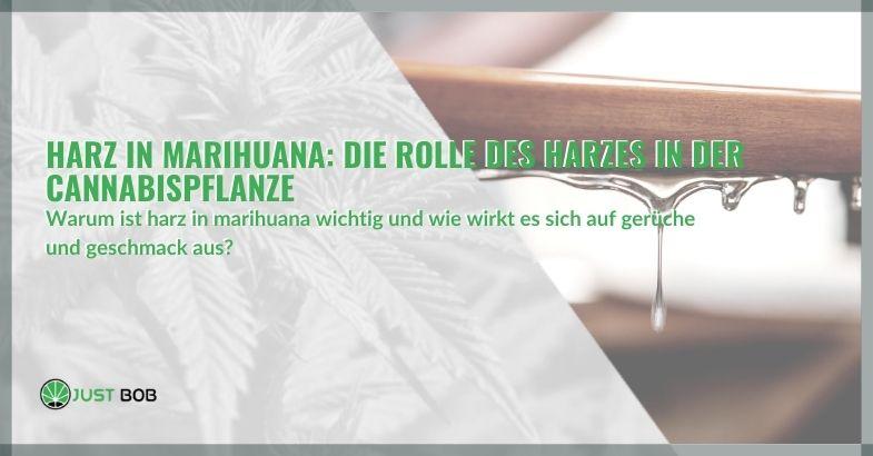 Harz in Marihuana: Die Rolle des Harzes in der Cannabispflanze