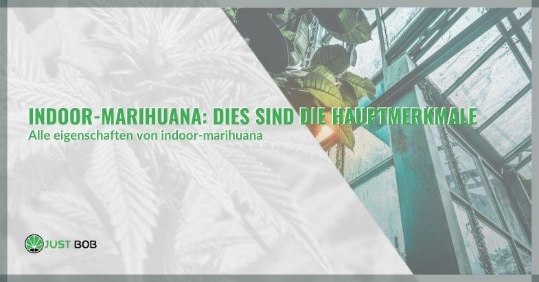 Indoor-Marihuana: Dies sind die Hauptmerkmale