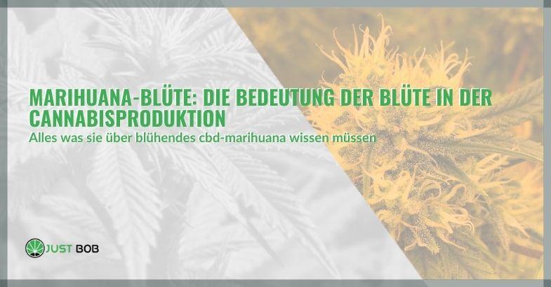 Marihuana-Blüte: Die Bedeutung der Blüte in der Cannabisproduktion