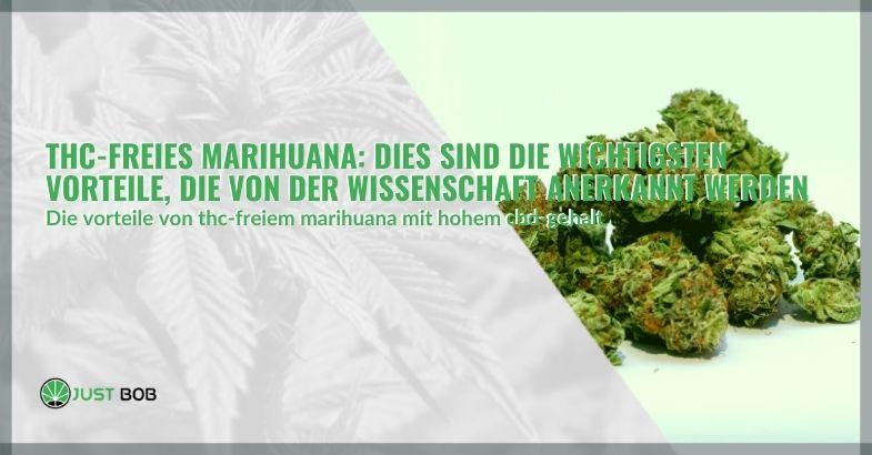 THC-freies Marihuana: Dies sind die wichtigsten Vorteile, die von der Wissenschaft anerkannt werden