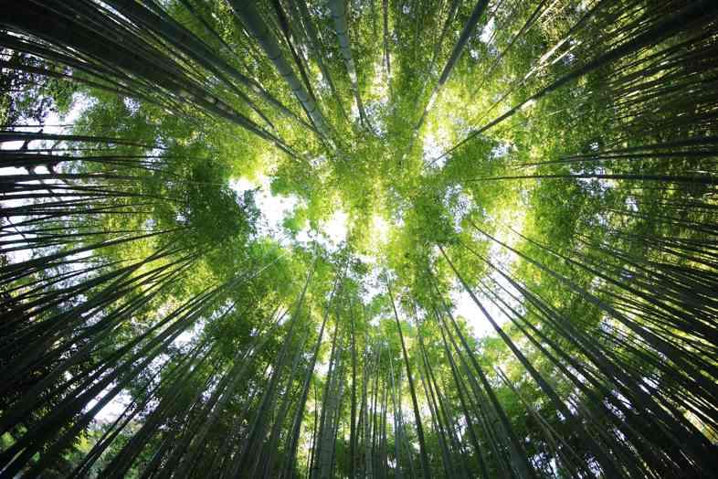 Die Geschichte des Marihuana-Baumes: zwischen Einfallsreichtum und Vorstellungskraft