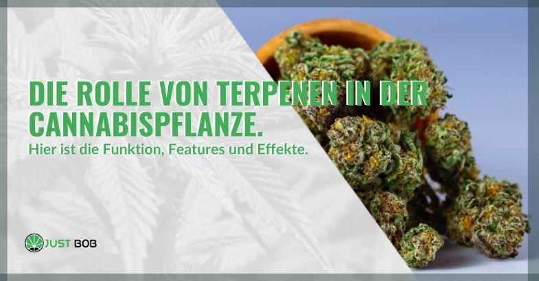 Welche Rolle spielen Terpene in der Cannabis-Cannabispflanze?