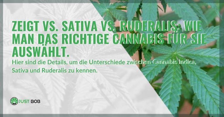 Wählen Sie das am besten geeignete Cannabis zwischen Indica, Sativa und Ruderalis.