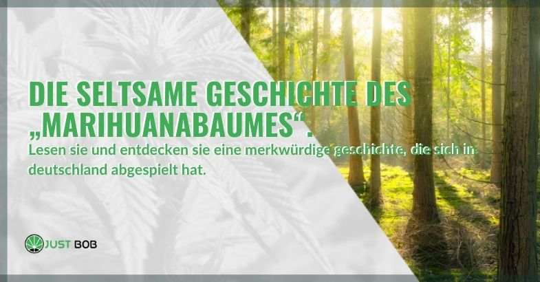 Die seltsame deutsche Geschichte vom Marihuanabaum
