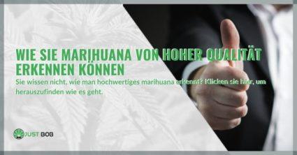 Wie Sie Marihuana von hoher Qualität erkennen können