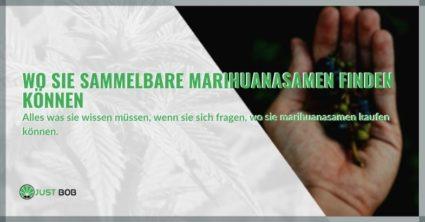Wo Sie sammelbare Marihuanasamen finden können