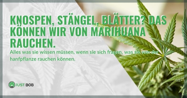 Knospen, Stängel und Blätter können aus der Marihuana-Pflanze geraucht werden