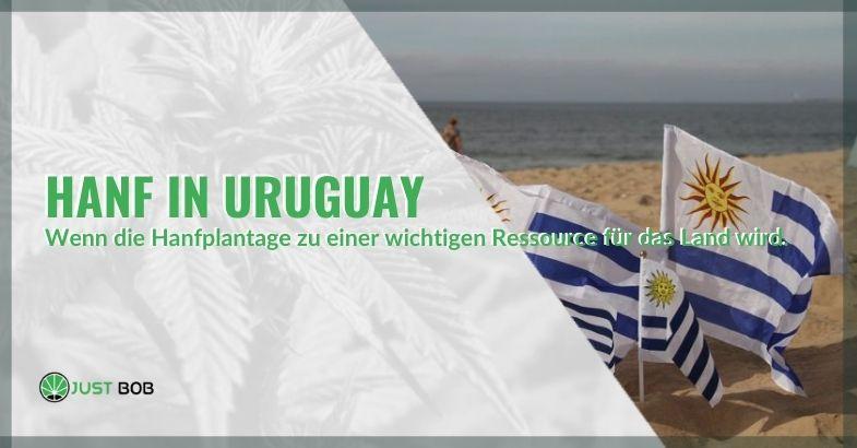 Eine wichtige Ressource für Uruguay: Hanfplantagen
