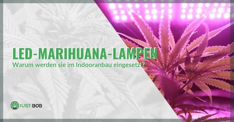 Warum werden LED-Leuchten für den Marihuana-Anbau in Innenräumen verwendet?