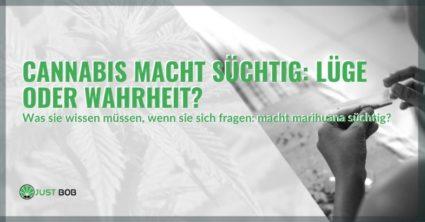 Stimmt es, dass Cannabis süchtig macht?
