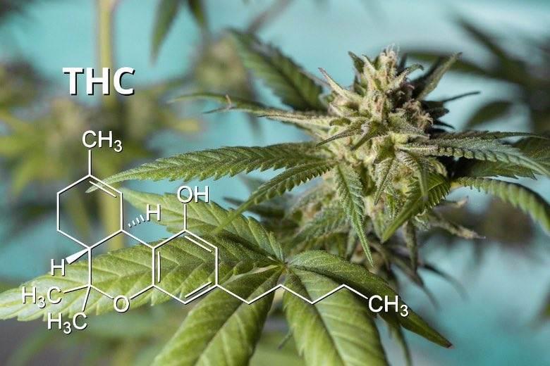 Die in Marihuana enthaltenen Substanzen