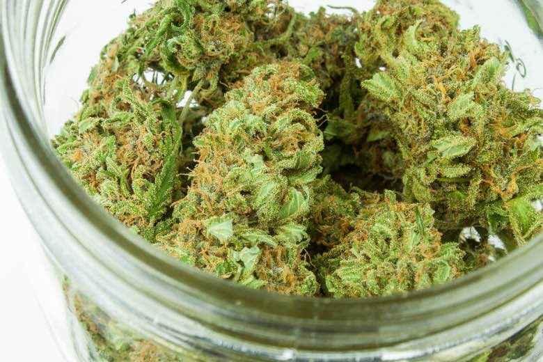 Trockenblumen von medizinischem Marihuana