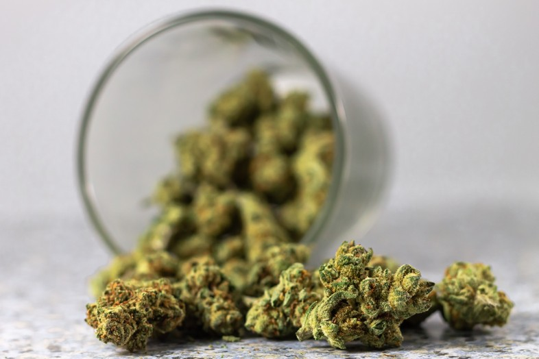 Wo finden wir Cannabisblüten von Bedrocan und Bedrobinol?