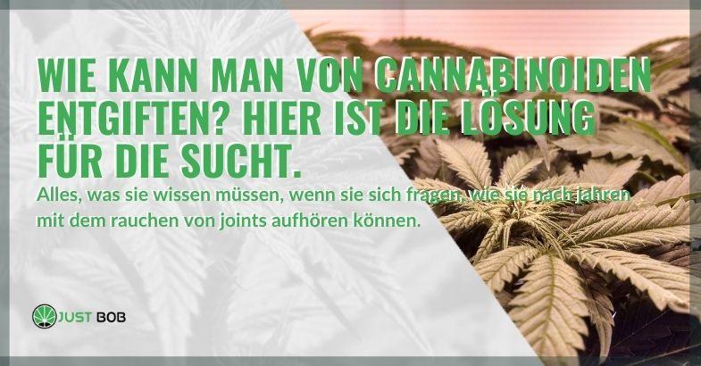 Hier ist die Lösung zur Entgiftung von Cannabinoiden!