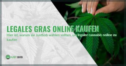 Kaufen Sie leichtes Marihuana im Internet