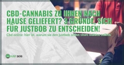 3 Gründe, Justbob zu wählen, um leichtes Marihuana direkt zu Hause zu erhalten