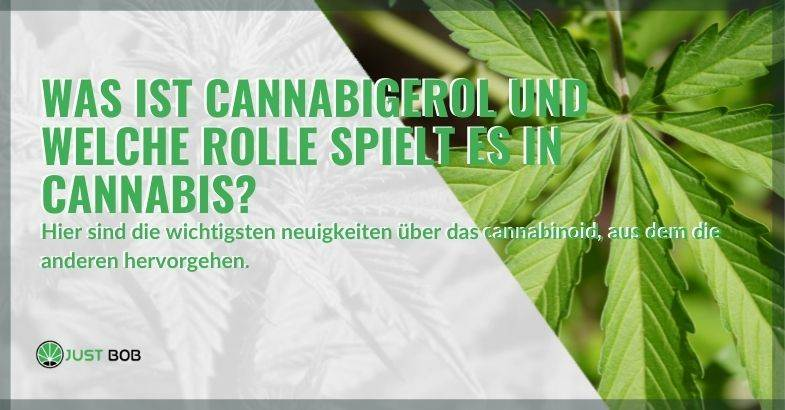 Die gängigsten Cannabis-Derivate
