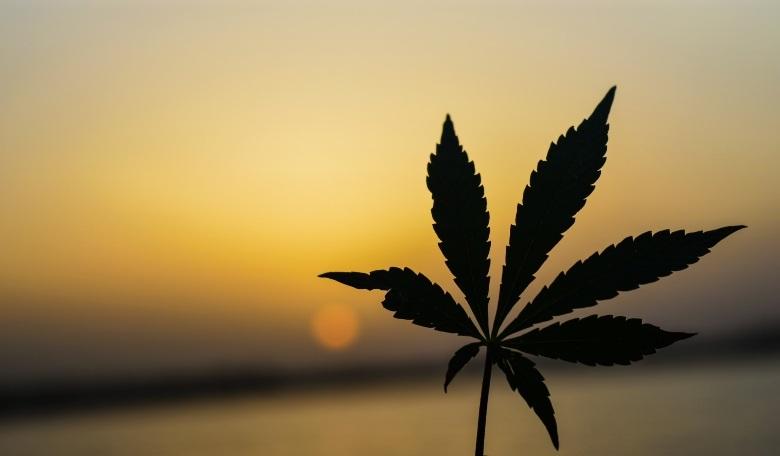 In Kroatien: Details zum Gesetzentwurf zur Legalisierung von Marihuana