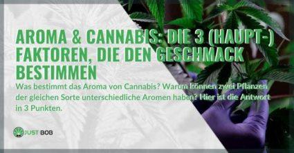 3 Hauptfaktoren, die das Aroma von Marihuana bestimmen