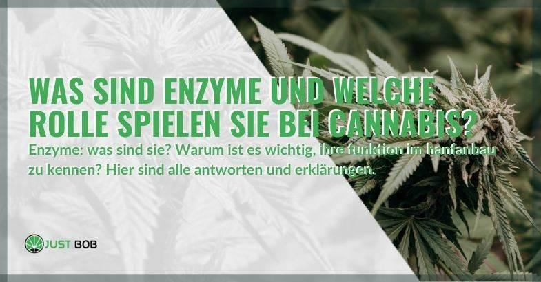 Was sind Enzyme in Cannabis und warum sind sie wichtig!