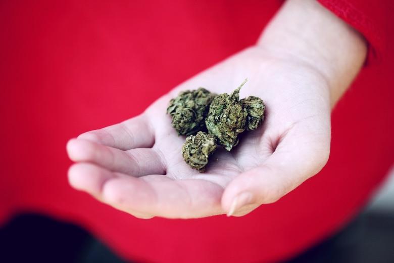 Kroatien könnte Cannabis für den Freizeitkonsum legalisieren
