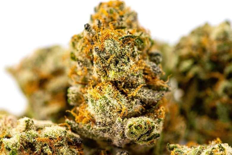 Die erschwinglichen Preise und die hervorragende Qualität von Justbobs leichtem Marihuana