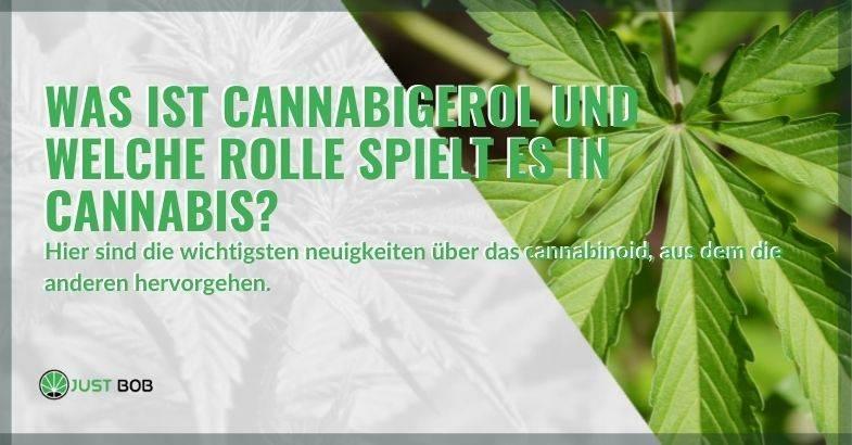 Was ist Cannabigerol und welche Rolle spielt es in Cannabis?