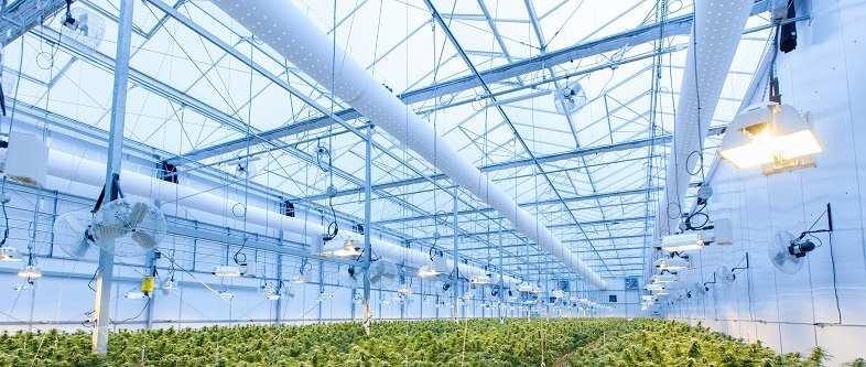 Das Gewächshaus ist die ideale Umgebung für den aeroponischen Anbau.