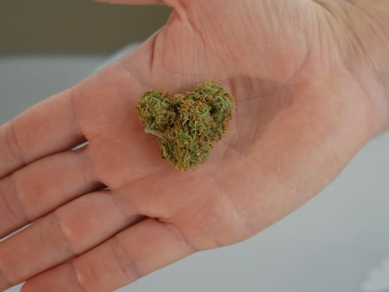 CBD-Marihuana von höchster Qualität mit Zertifizierungen auf Justbob