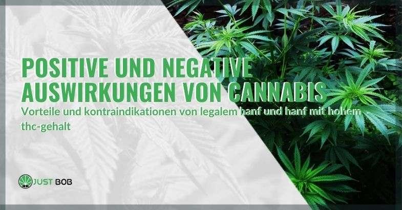 Positive und negative Auswirkungen von CBD und Cannabis mit hohem THC-Gehalt