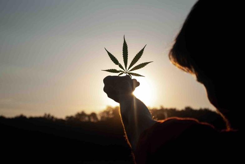 Unterschiede zwischen leichten Cannabiseffekten und illegalem Cannabis