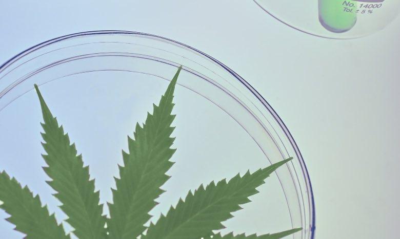 Reagenzglas aus leichtem Hanf
