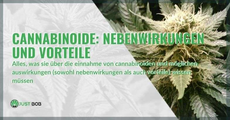 Alles über Cannabinoide und ihre möglichen Wirkungen