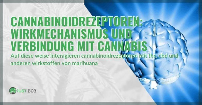 Wie interagieren Cannabinoid-Rezeptoren mit THC, CBD und anderen Marihuana-Verbindungen?