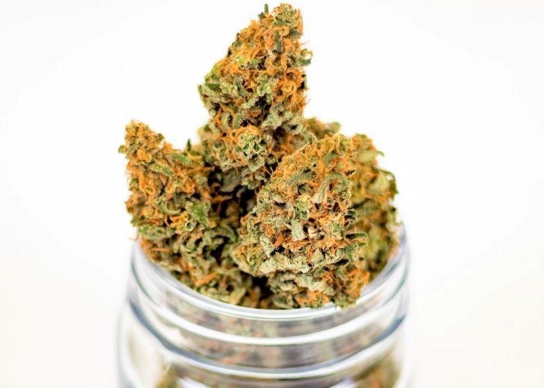 Wie erkenne ich eine hochwertige Cannabisblüte