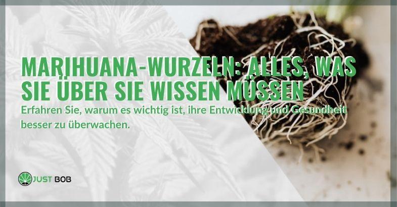 Alles, was Sie über die Wurzeln von Marihuana wissen müssen